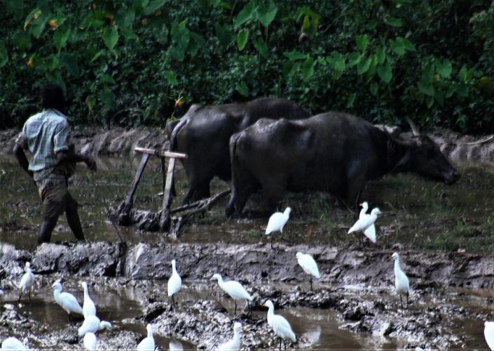 Sri Lanka - Kandy surroundings 045