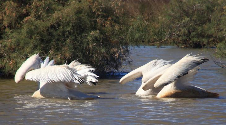 Senegal - Djoudj National Park 048