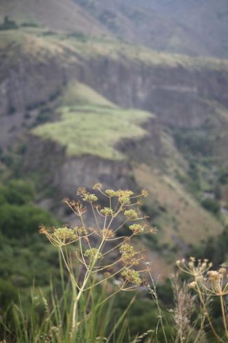 Armenia - Yerevan surroundings 054 - Garni