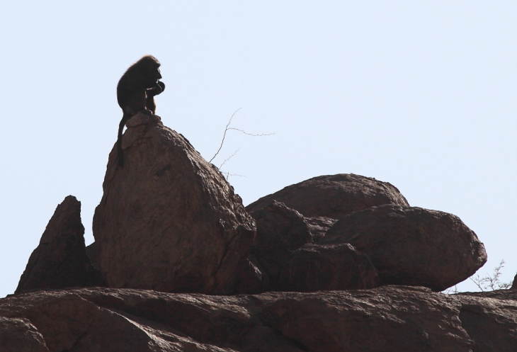 Sudan - Kassala 052 - Khatmiyya Hasan tomb