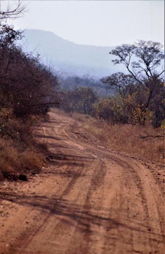 South Africa - Kruger NP 053