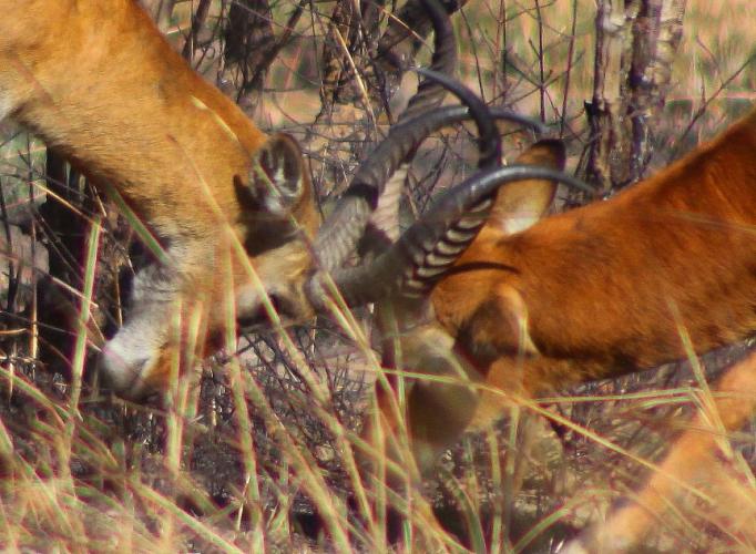 Burkina Faso - National Parks W & Arly 054