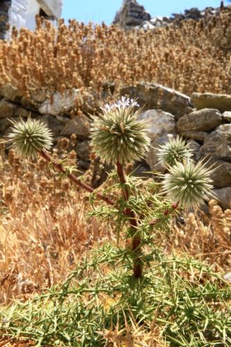 Greece - Amorgos - Hora 057