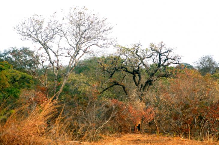 Burkina Faso - National Parks W & Arly 057