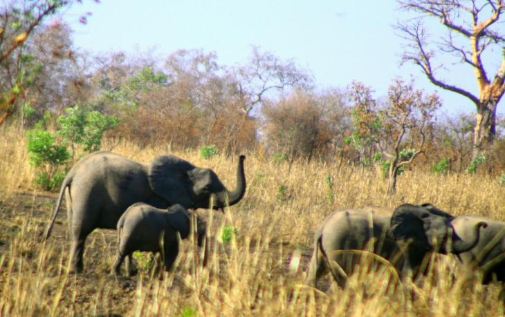 Burkina Faso - National Parks W & Arly 058