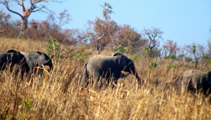 Burkina Faso - National Parks W & Arly 059