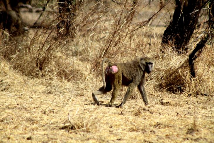 Burkina Faso - National Parks W & Arly 060