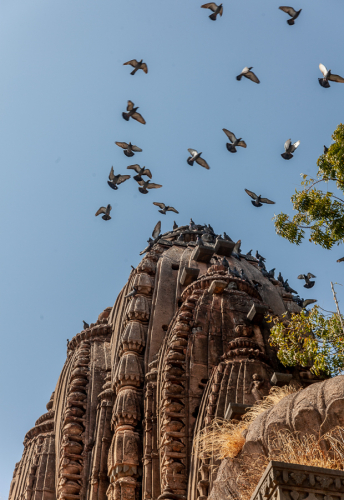 India - Madhya Pradesh - Maheshwar 063