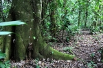 Peru - Amazonas 63