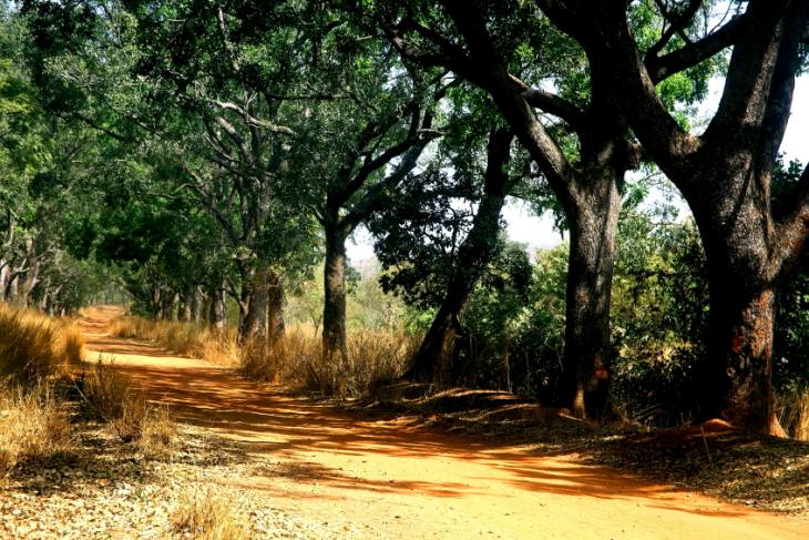 Burkina Faso 063 - On the road