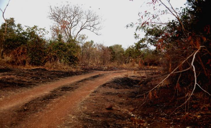 Burkina Faso - National Parks W & Arly 064