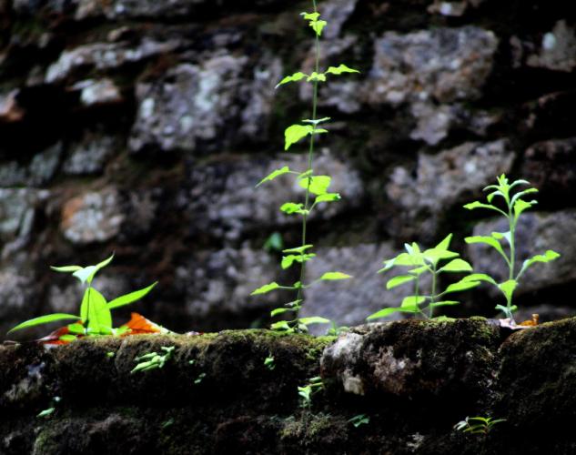Mexico - Palenque surroundings 065 - Yaxchilan