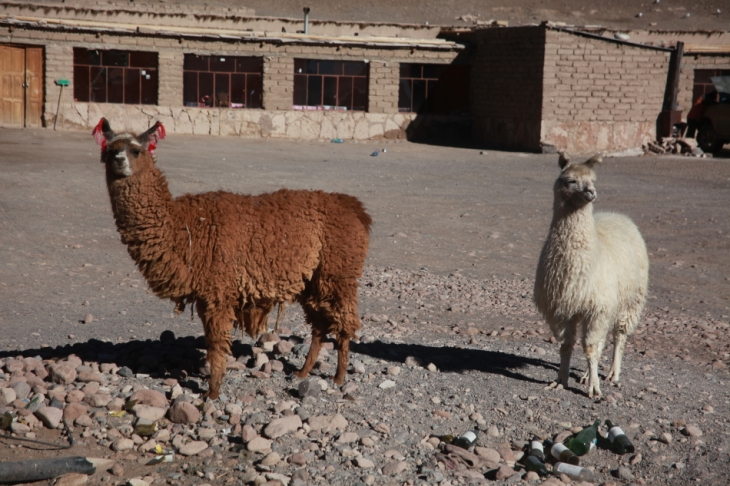 Bolivia - Itinerary Sur Lipez-Tupiza 068 / Laguna Colorada
