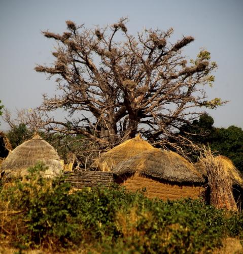 Burkina Faso - Falaise du Gobnangou 068