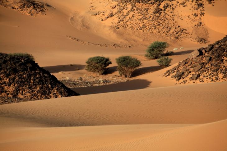 Sudan 070 - Wadi Malik