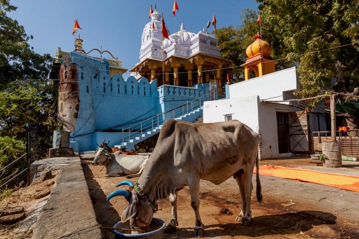 India - Madhya Pradesh - Maheshwar 070