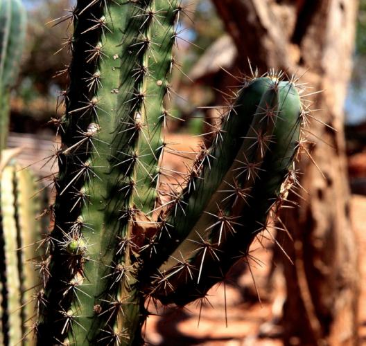 Mexico - El Pacifico 070 - Mazunta