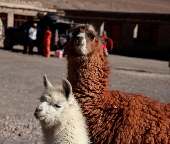 Bolivia - Itinerary Sur Lipez-Tupiza 071 / Laguna Colorada