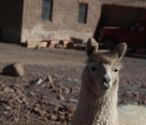 Bolivia - Itinerary Sur Lipez-Tupiza 072 / Laguna Colorada