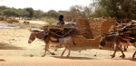 Burkina Faso 077 - On the road to Dori