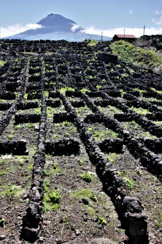 Portugal - Azores - Pico 080 - Cais do Murato