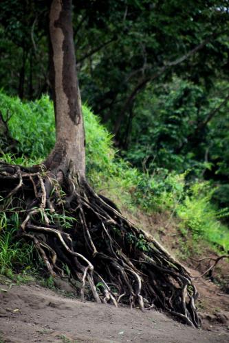 Mexico - Palenque surroundings 082 - Bonampak
