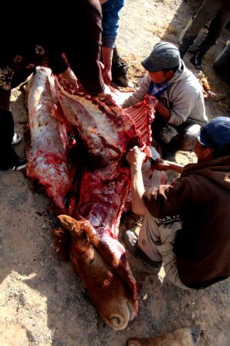 Mongolia 0948 - Gobi desert - Khongorin Els