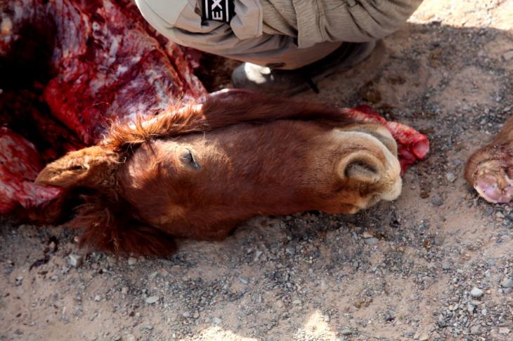 Mongolia 0949 - Gobi desert - Khongorin Els