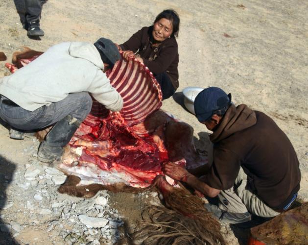 Mongolia 0950 - Gobi desert - Khongorin Els