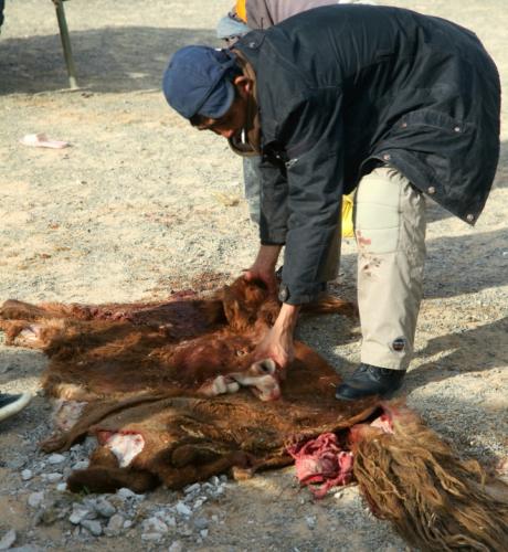 Mongolia 0953 - Gobi desert - Khongorin Els