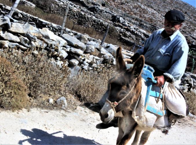 Greece - Amorgos 104 - Asfondilitis