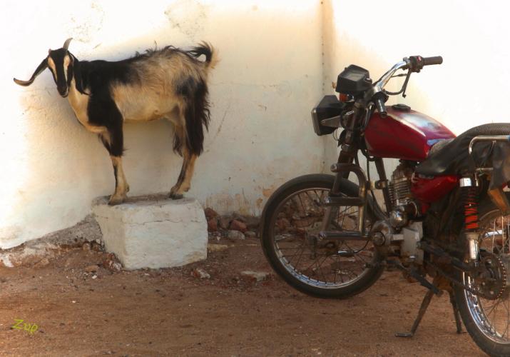 Sudan - Kassala 111 - Toteil