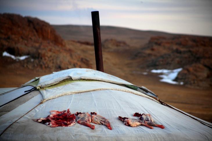 Mongolia 1174 - Gobi desert - Baga Gazrin Chuluu