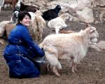 Mongolia 1184 - Gobi desert - Baga Gazrin Chuluu