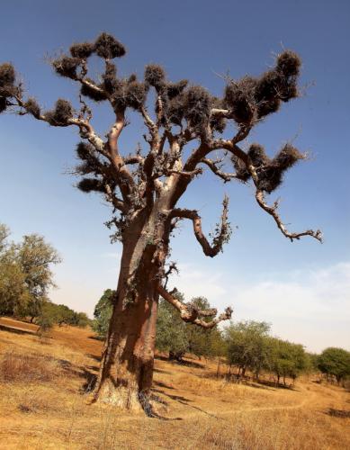 Burkina Faso 042 - On the way to Aribinda