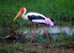 Sri Lanka - Yala National Park 029