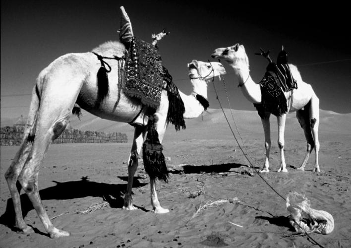 Morocco 131 - Going South - Zagora