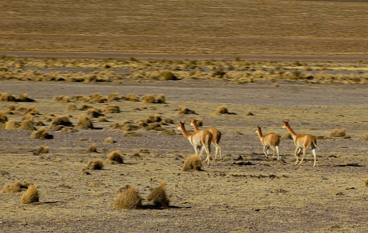 Bolivia - Itinerary Sur Lipez-Tupiza 133 / On the road to San Pablo