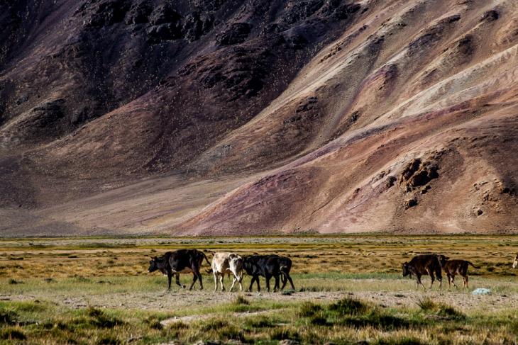 Tajikistan 138 - Bulunkul
