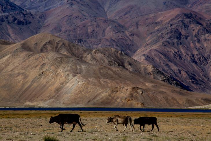 Tajikistan 144 - Bulunkul