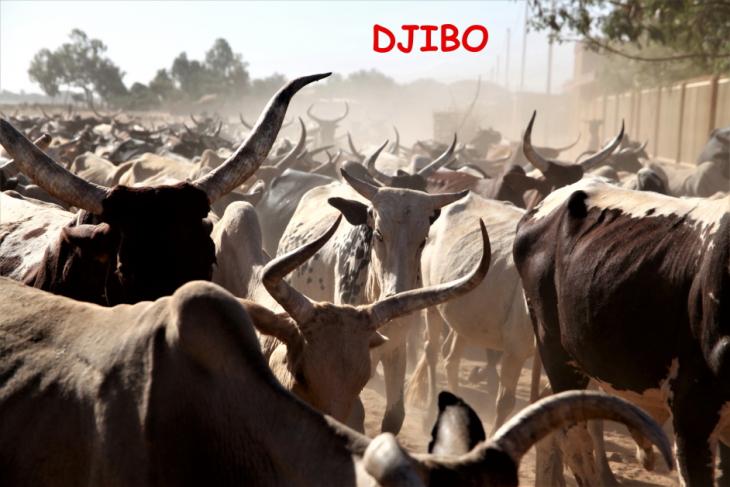 Burkina Faso - Djibo 001