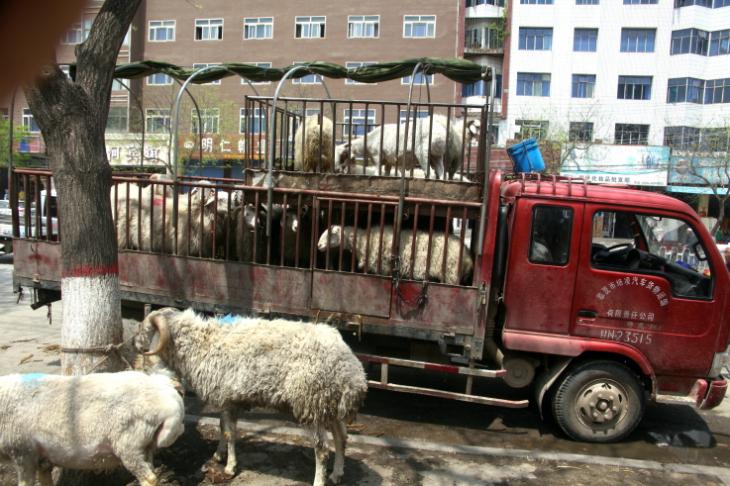 China - Gansu 165 - Linxia