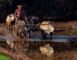 India - Odisha 188 - On the way