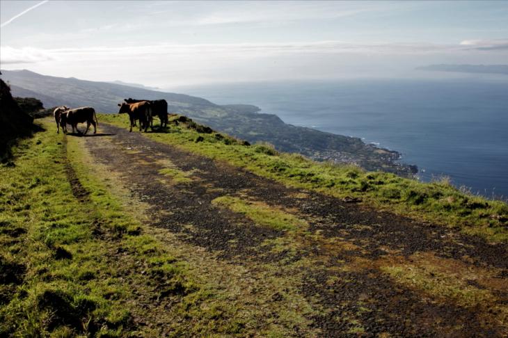 Portugal - Azores - Pico 199