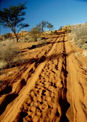 Namibia - Bushmen 001
