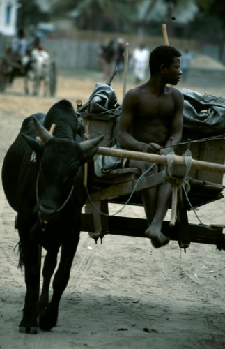 Madagascar 001 - Morondava