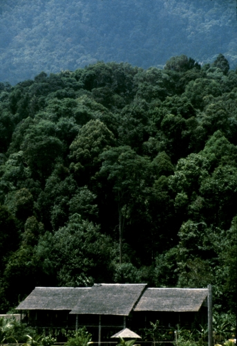 Malaysia - Borneo, journey to the Iban tribe 001