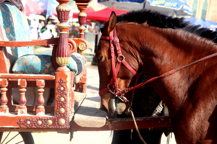 China - Xinjiang 208 - Kashgar