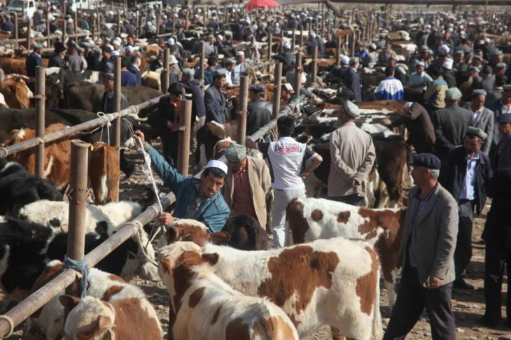 China - Xinjiang 274 - Kashgar - Sunday animal market
