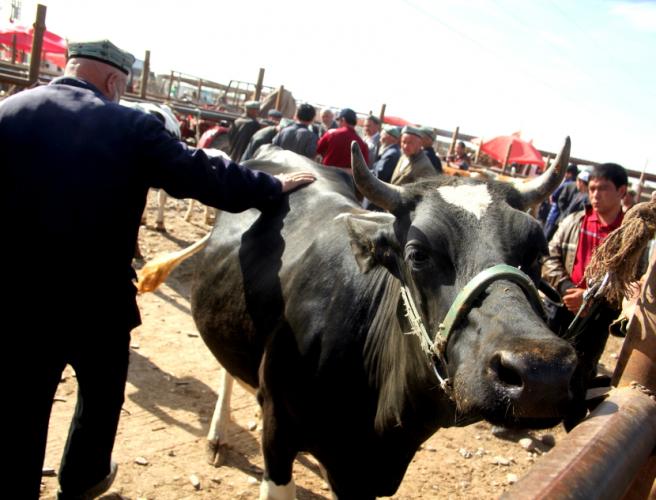 China - Xinjiang 278 - Kashgar - Sunday animal market